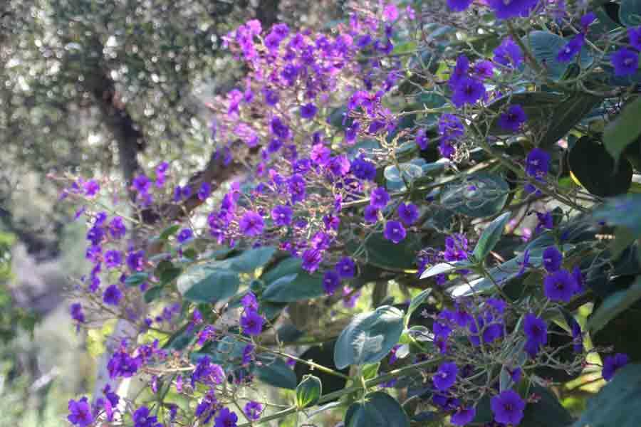 Kreta Frühling es blüht