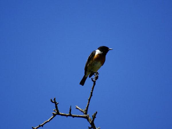 Kreta Frühling: Ein Vogel auf dem Ast pfeift den Frühling herbei