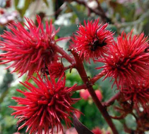 Blumen im Frühling auf Kreta
