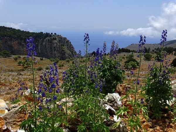 Frühling auf der Kreta Hochebene