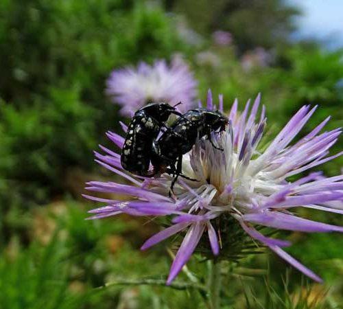 Flora und Fauna erwachen im Frühling