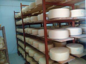 Käserei auf Kreta