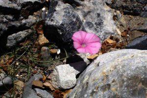 Wandern in den Vielen Schluchten Kretas